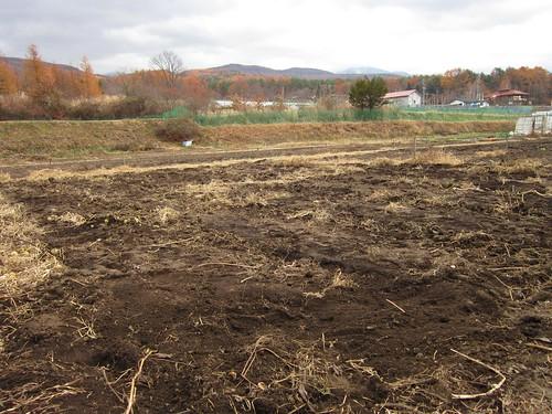 全て撤去した畑 2013年11月20日10:58 by Poran111