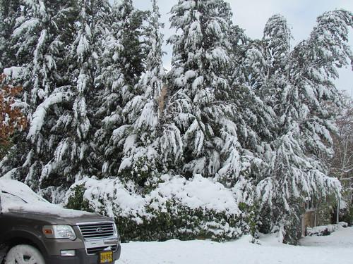 Snow Dec 2013