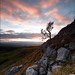 Twistleton Tree (Later) by ScudMonkey