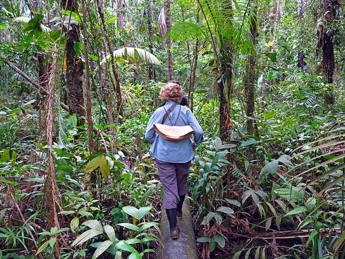 Cuyabeno Rain Forest Ecuador