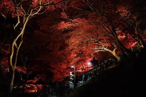 夜楓大山寺