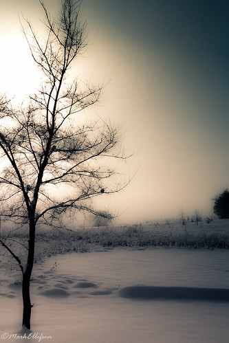 morning winter snow fog wisconsin canon december foggy sigma rochester wi 2013 canon60d caseeaglepark