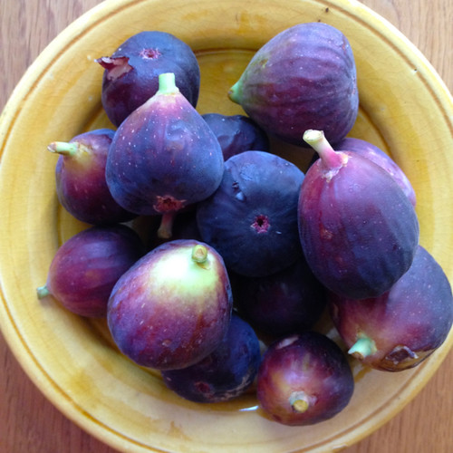 Eveleigh figs