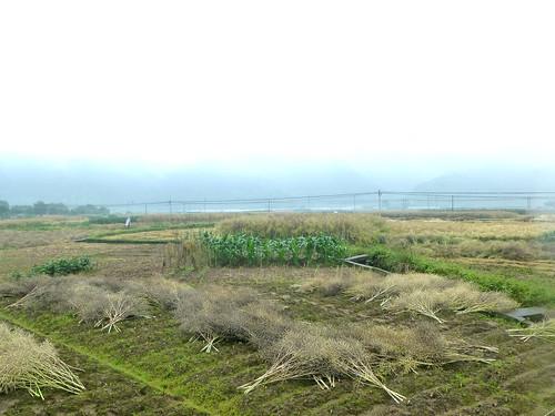 Zhejiang-Cangpocun (74)