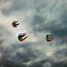 Heading Skywards by Steve Taylor (Photography)