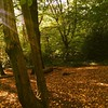 Catching the rays in #Highgate #Wood : #autumn #sunshine