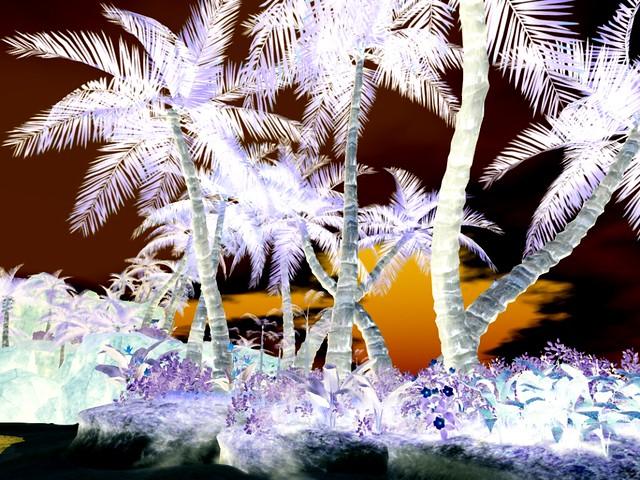 Playa  Perdida -  Palm Garden
