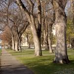 Washington Square Walkway Salt Lake City Downtown Picture   8 by Jeffrey Grandy