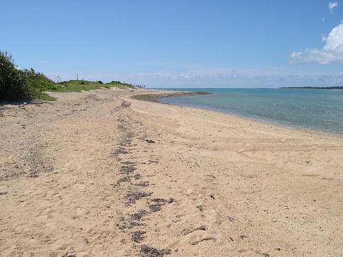 のんびりのびのびの浜