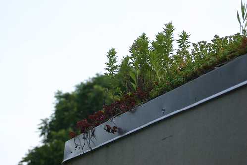 Green roof at Clark Cooper Community Gardens