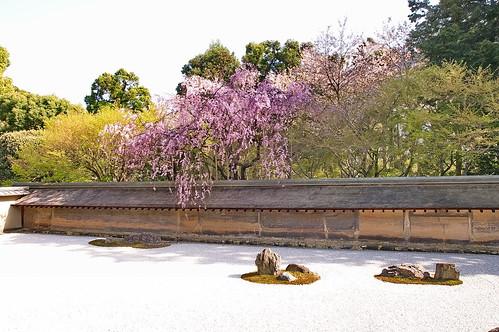 【写真】2013 桜 : 龍安寺/2020-01-22/IMGP9837