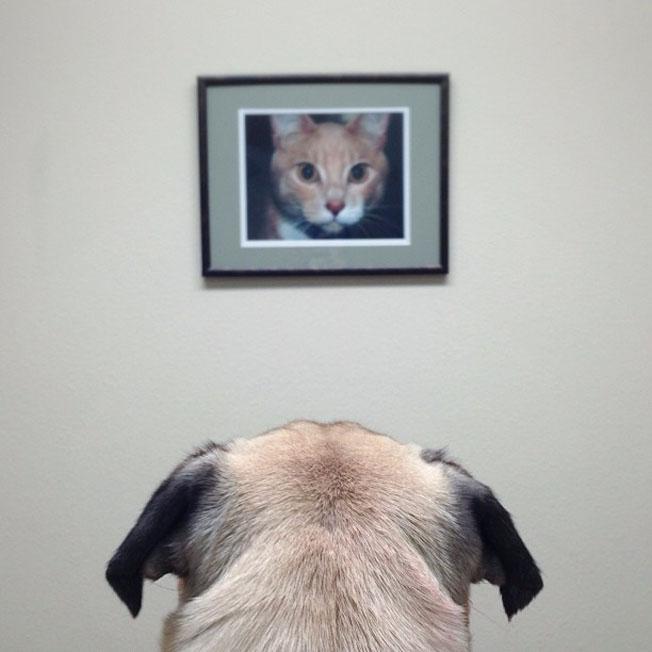 Meet-Norm-Dog-12