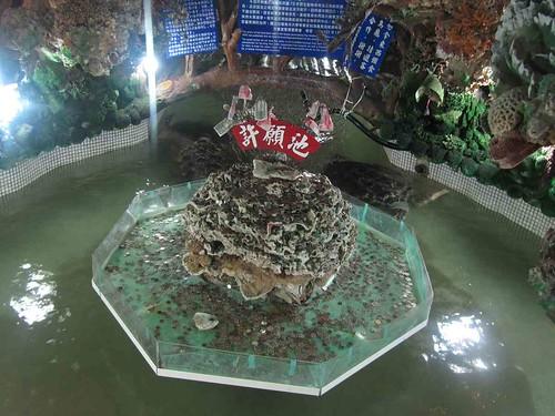 02-2013澎湖-大義宮許願池