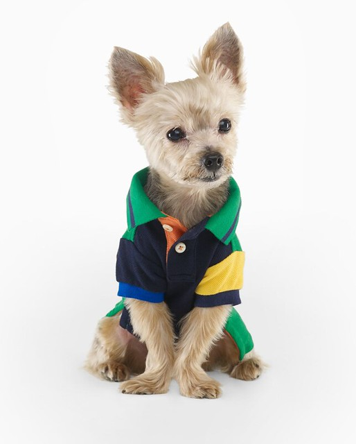 Ralph Lauren Color-Blocked Dog Polo