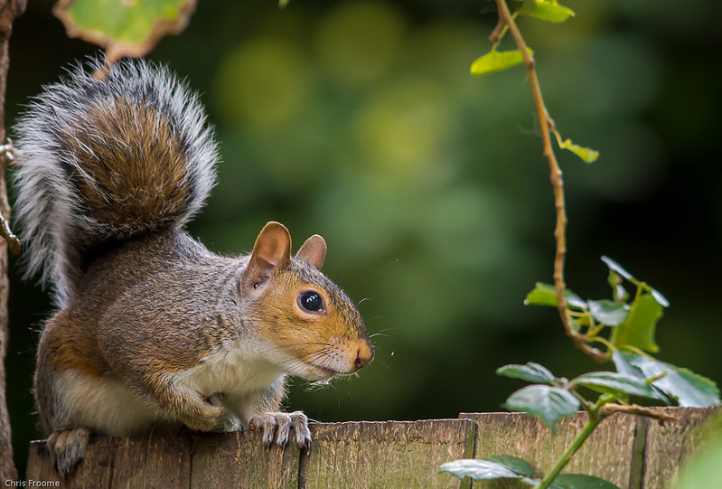 another squirrel poser by froomey