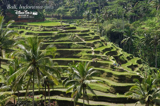 Bali Day 2 Tegalalang Rice Terrace 01
