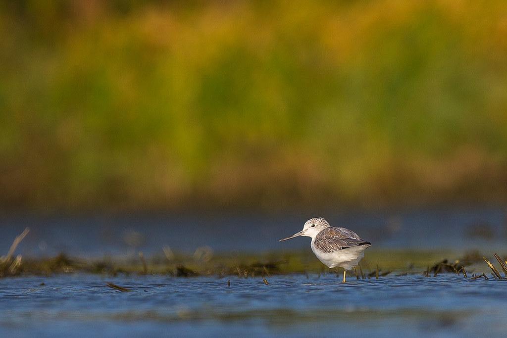 竹南水鳥-0055