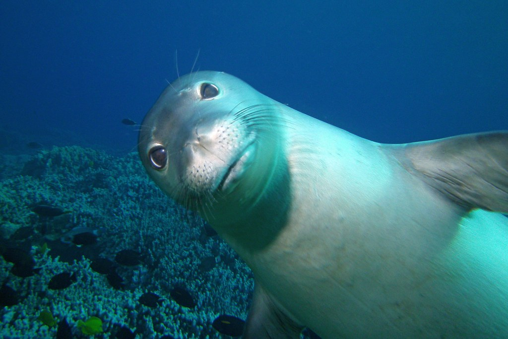 pinniped photobomb