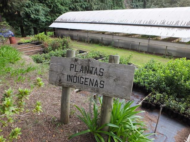 Produção de plantas nativas