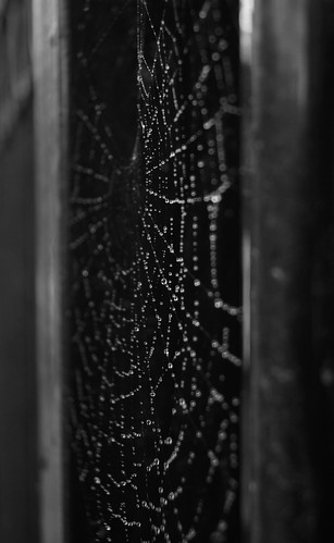 Indra's pearls - Water droplets in a spider web 5