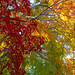 KALEIDOSCOPE OF AUTUMN COLOR by ajpscs