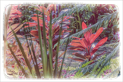 Image of some beautiful red plants at Ormond Memorial Gardens
