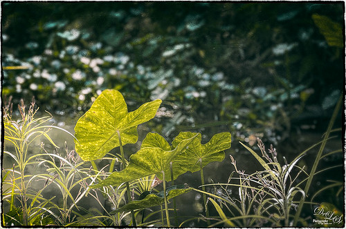Image of some pretty green leaves using Nik Analog Efex Pro plug-in