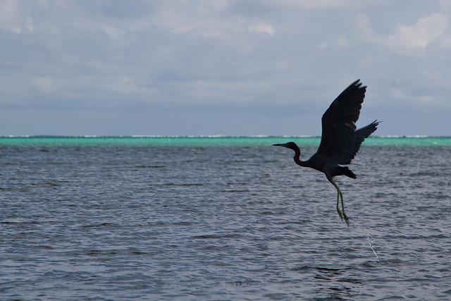 2013_11_Belize-9277