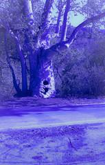 purple tint
