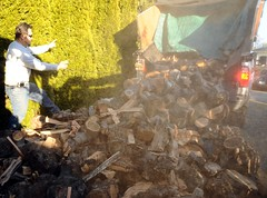Jim direct his driver on dumping a cord of wood in the front yard, getting prepared for a cold winter, Seattle, Washington, USA
