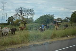 Nicaraguan Cowboys