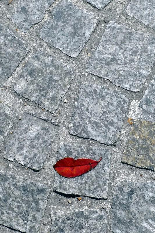 Sarah Illenberger, Fallen Lips