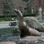 Sea lion entertainment