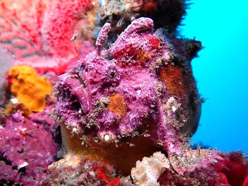 Anglerfish Bass Point