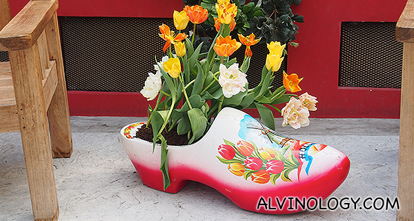 Tulips in a clog