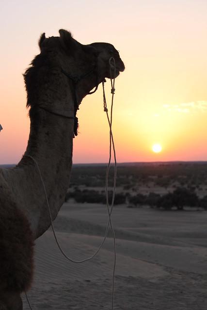 20130225_3336-Jaisalmer-camel-sunset