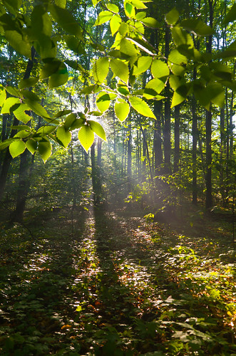 trees light leaves forest sunrise landscape spring woods glow flare beech