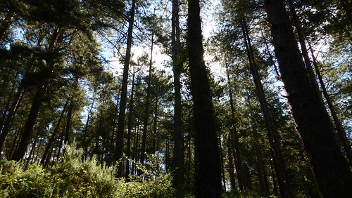 012b Sentier de découvertede la Montagne, Lessay