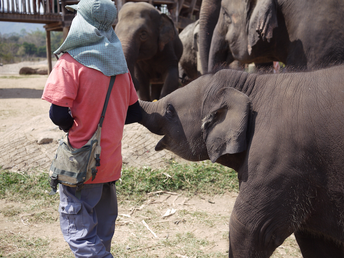Elephant Nature Park Chiang Mai-28