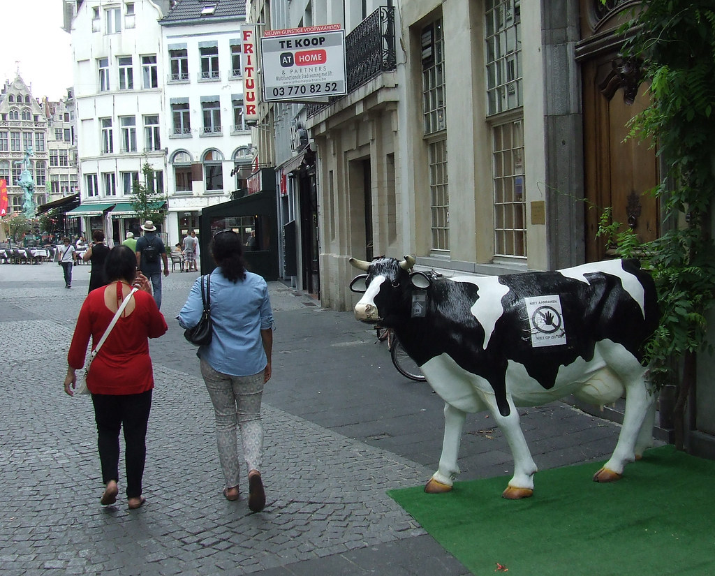 Antwerp street cow