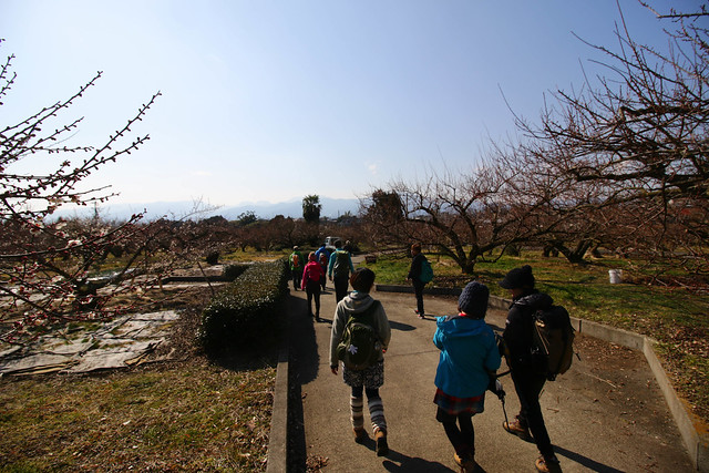 20150211-曽我丘陵-0221.jpg