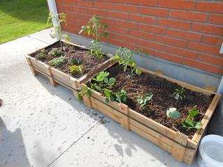 Our Gardens! (6)
