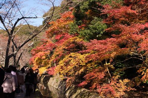 【写真】2012 紅葉 : 哲学の道/2020-10-03/IMGP7374