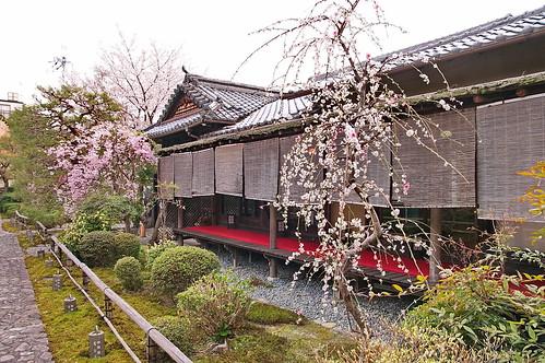【写真】2013 桜 : 閑臥庵/2021-07-16/IMGP9634