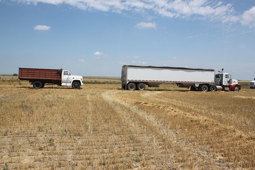 Times have changed a bit. Our Peterbilt semi parked in front of one of our farmer's trucks.