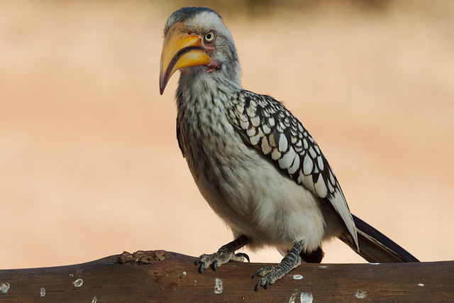 Calling Me a Dodo?