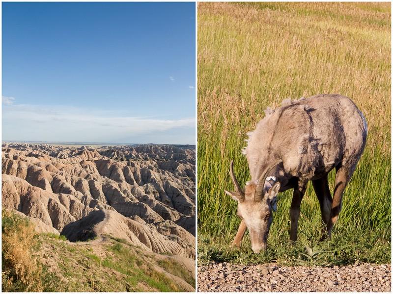 Badlands & Mountain Goat