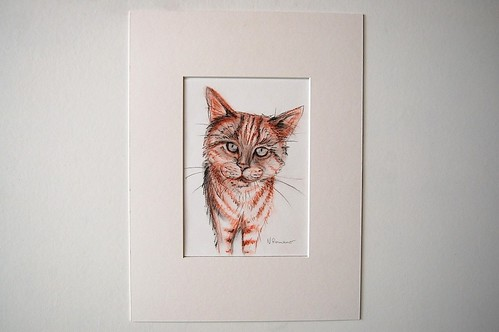 Cat Pencil Drawing by Sparrow Little
