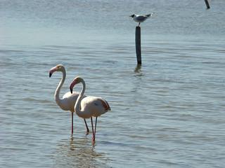 104 flamingo's