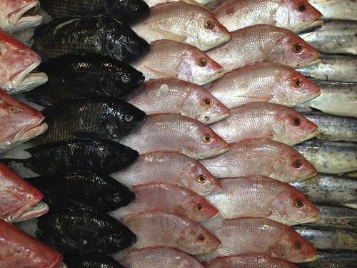 Still Life (Fish) 3